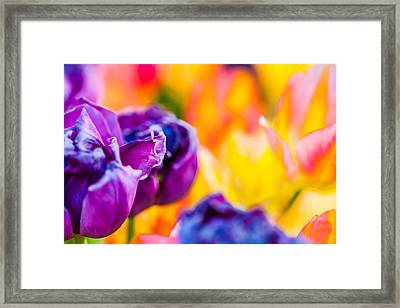 Framed Print featuring the photograph Tulips Enchanting 49 by Alexander Senin