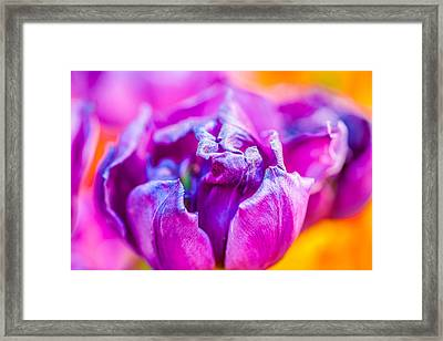 Framed Print featuring the photograph Tulips Enchanting 50 by Alexander Senin
