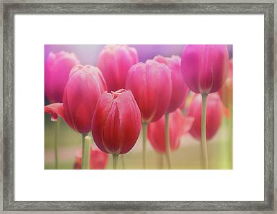 Tulips Entwined Framed Print by Carol Japp