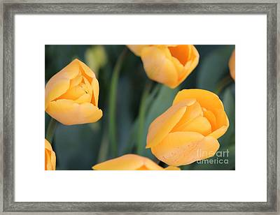 Framed Print featuring the photograph Tulips by Erica Hanel