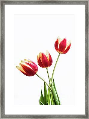 Tulips For My Love Framed Print