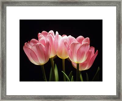 Tulips For Tania Framed Print