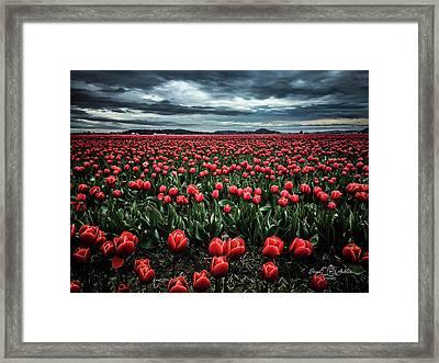 Tulips Forever Framed Print