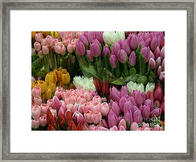 Framed Print featuring the photograph Tulips Galore by Terri Thompson