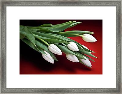 Tulips I Framed Print by Tom Mc Nemar