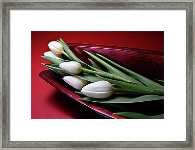 Tulips II Framed Print by Tom Mc Nemar