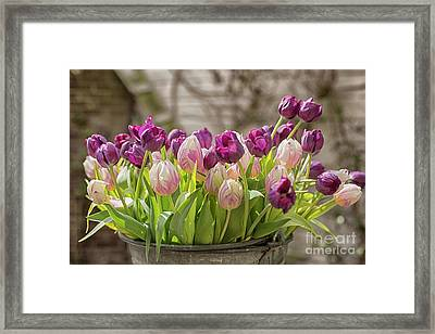 Framed Print featuring the photograph Tulips In A Bucket by Patricia Hofmeester