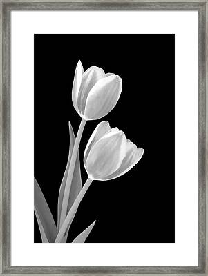 Tulips In Black And White Framed Print