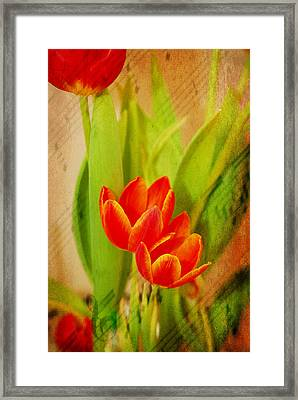 Tulips In Harmony Framed Print by Mary Timman