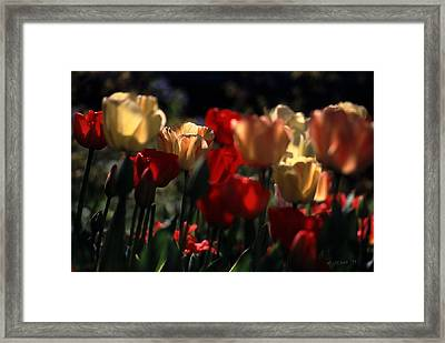 Framed Print featuring the photograph Tulips In Morning Light by Michael Flood