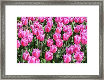 Framed Print featuring the photograph Tulips In Pink Color by Patricia Hofmeester