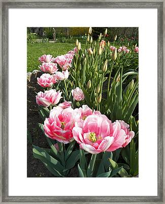 Tulips In Pink Framed Print