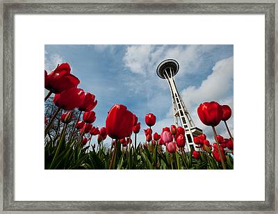 Tulips In Seattle H081 Framed Print by Yoshiki Nakamura