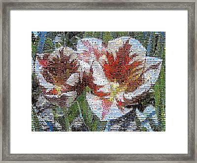Tulips In Springtime Photomosaic Framed Print by Michelle Calkins