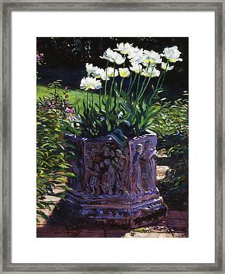 Tulips In Stone Framed Print by David Lloyd Glover