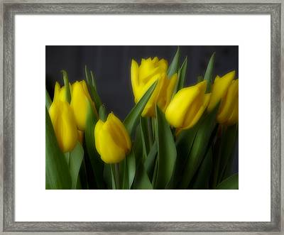 Tulips In The Kitchen Framed Print by Ches Black
