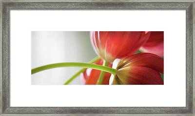 Tulips In The Morning Framed Print by Theresa Tahara