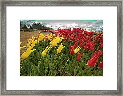 Tulips In The Wind Framed Print