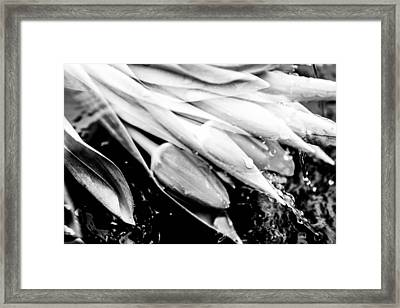 Tulips In Water Splash Framed Print by Tommytechno Sweden