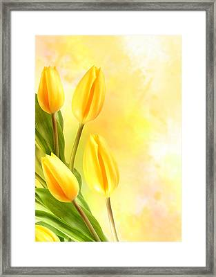 Tulips In Yellow Framed Print