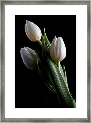 Tulips Iv Framed Print by Tom Mc Nemar