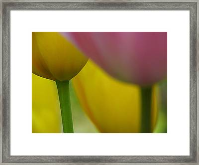Tulips Framed Print by Juergen Roth