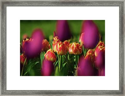 Tulips Framed Print by Martina Fagan
