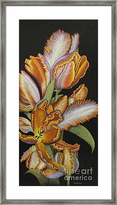 Tulips Of Fire Framed Print