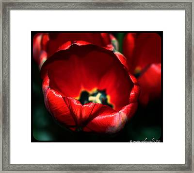 Tulips Of Love Framed Print