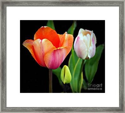 Tulips On Black Framed Print