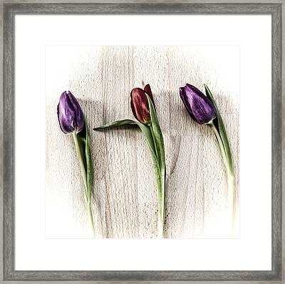 Tulips On Wooden Board. Framed Print