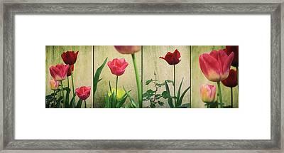 Tulips Panel Framed Print