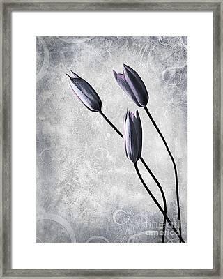 Tulips Framed Print by Jacky Gerritsen