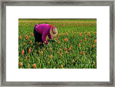 Tulips Picker Framed Print