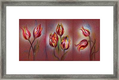 Tulips - Red Beauty  Framed Print