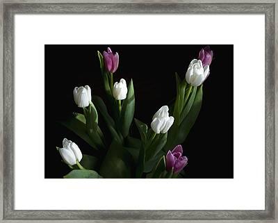 Tulips Framed Print by Rhonda McDougall