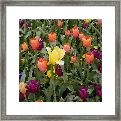 Tulips Framed Print by Rodger Mansfield