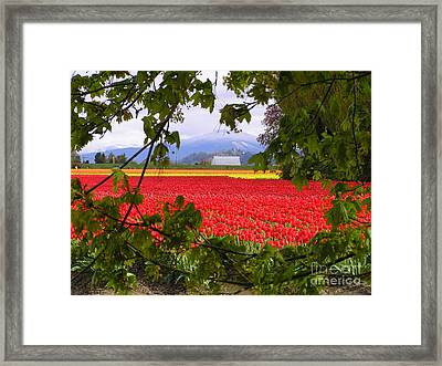 Tulips Secret Window Framed Print by Louise Magno