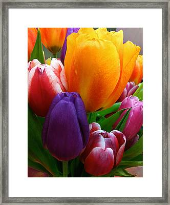 Framed Print featuring the photograph Tulips Smiling by Marie Hicks