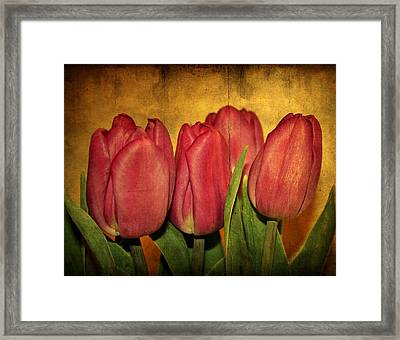Tulips Standing Framed Print by Cathie Tyler