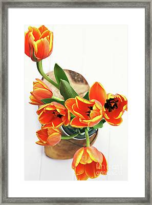 Framed Print featuring the pyrography Tulips by Stephanie Frey