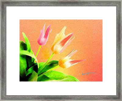 Tulips Three Framed Print by Anthony Caruso