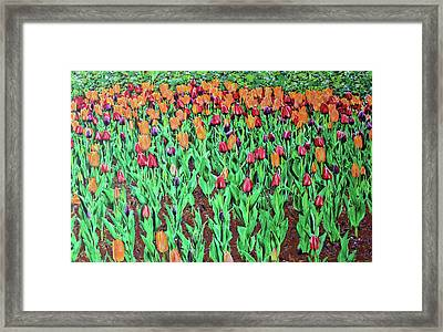 Tulips Tulips Everywhere Framed Print
