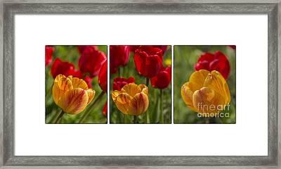 Tulips Framed Print by Veikko Suikkanen