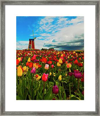 Tulips Windmill 2 Framed Print