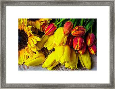 Tulips With Sunflowers Framed Print by Garry Gay