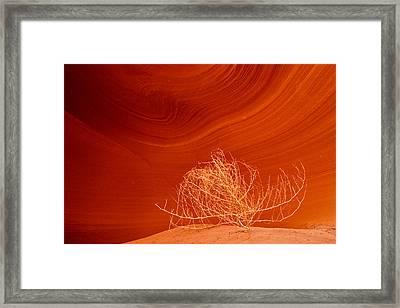 Tumbleweed Framed Print