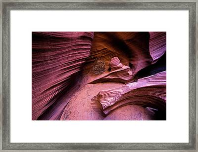 Framed Print featuring the photograph Tumbleweed In The Canyon by Stephen Holst