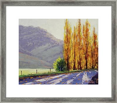 Tumut Poplars Framed Print by Graham Gercken