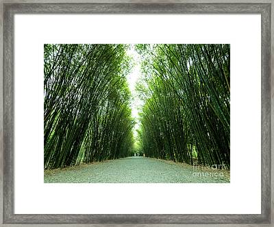 Tunnel Bamboo Trees And Walkway. Framed Print by Tosporn Preede